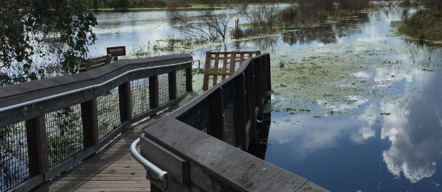 After Hurricane Irma at Paynes Prairie – Michael Stone Online